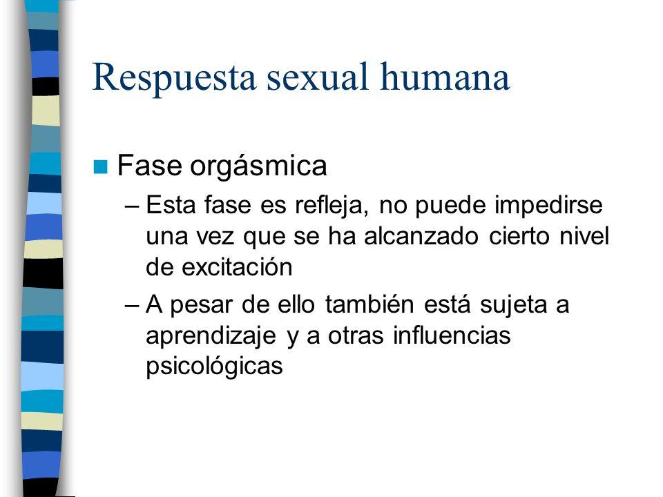 Respuesta sexual humana Fase orgásmica –Esta fase es refleja, no puede impedirse una vez que se ha alcanzado cierto nivel de excitación –A pesar de el