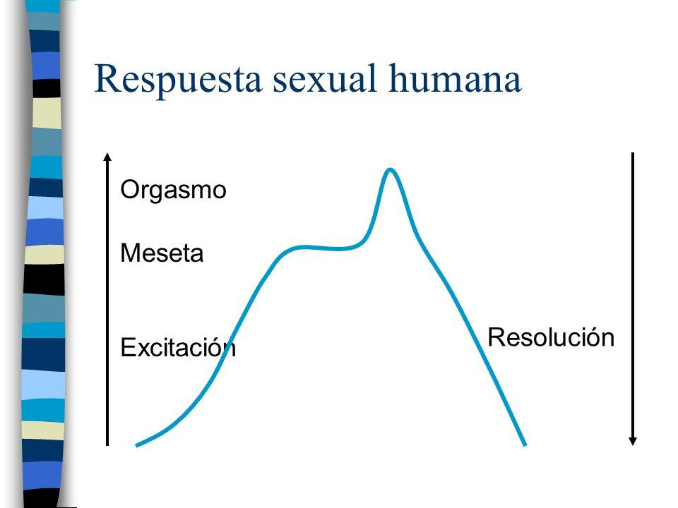Respuesta sexual humana Orgasmo Meseta Excitación Resolución