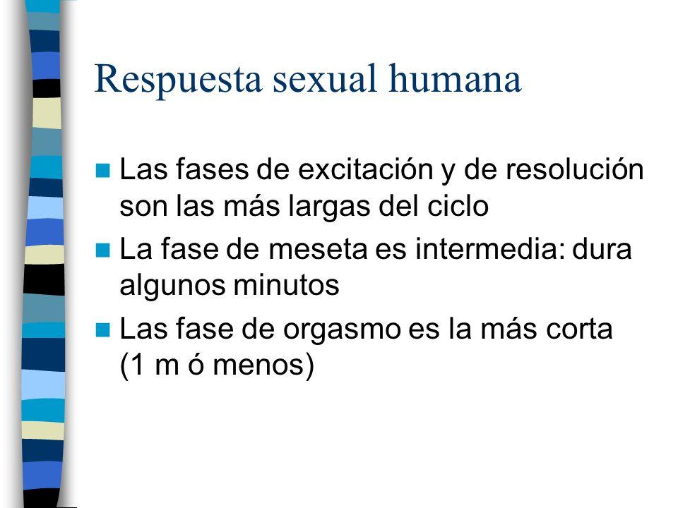 Respuesta sexual humana Las fases de excitación y de resolución son las más largas del ciclo La fase de meseta es intermedia: dura algunos minutos Las