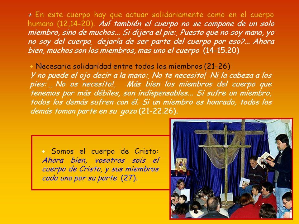 * Εl cuerpo humano es uno y tiene muchos miembros, todos necesarios para el cuerpo, igualmente sucede con Cristo (12,12-21): Pues del mismo modo que e