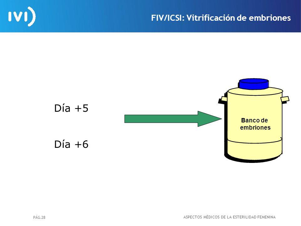PÁG.28 Banco de embriones Día +5 Día +6 FIV/ICSI: Vitrificación de embriones ASPECTOS MÉDICOS DE LA ESTERILIDAD FEMENINA