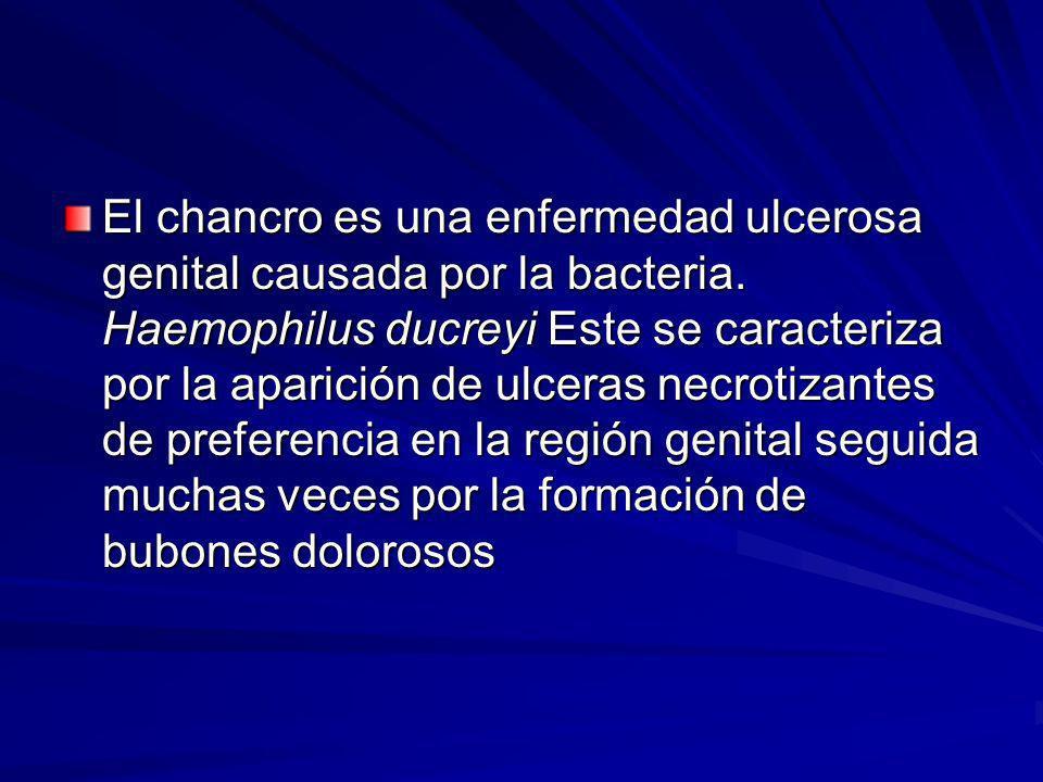 El chancro es una enfermedad ulcerosa genital causada por la bacteria. Haemophilus ducreyi Este se caracteriza por la aparición de ulceras necrotizant
