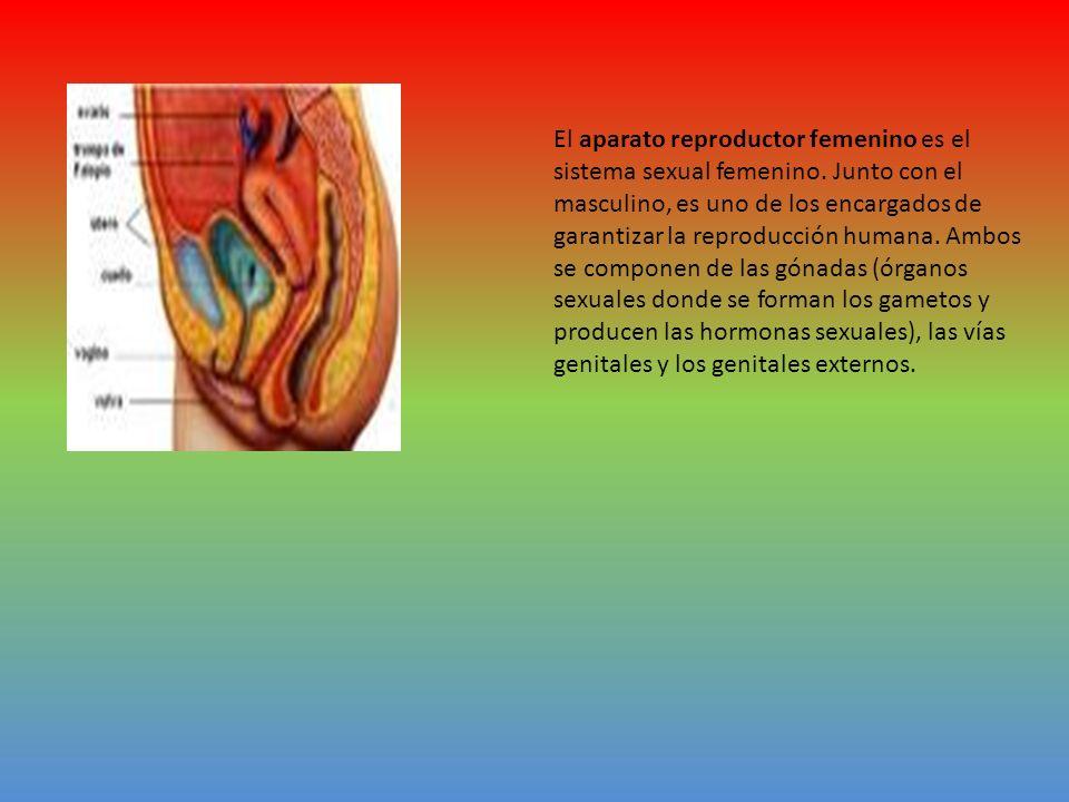 El aparato reproductor femenino es el sistema sexual femenino. Junto con el masculino, es uno de los encargados de garantizar la reproducción humana.