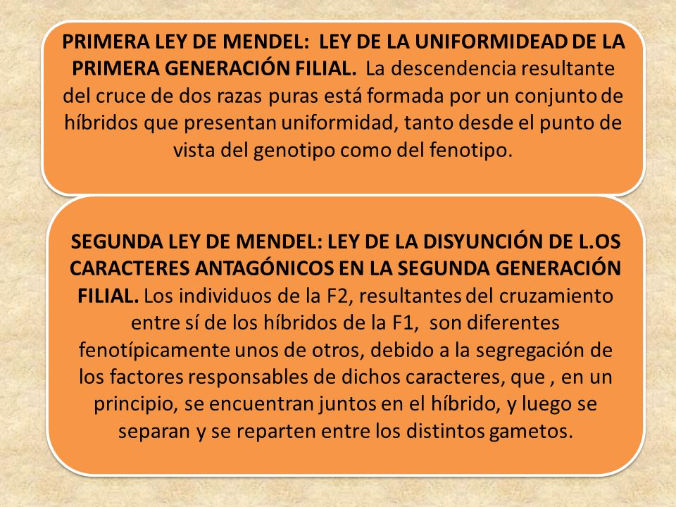 PRIMERA LEY DE MENDEL: LEY DE LA UNIFORMIDEAD DE LA PRIMERA GENERACIÓN FILIAL. La descendencia resultante del cruce de dos razas puras está formada po