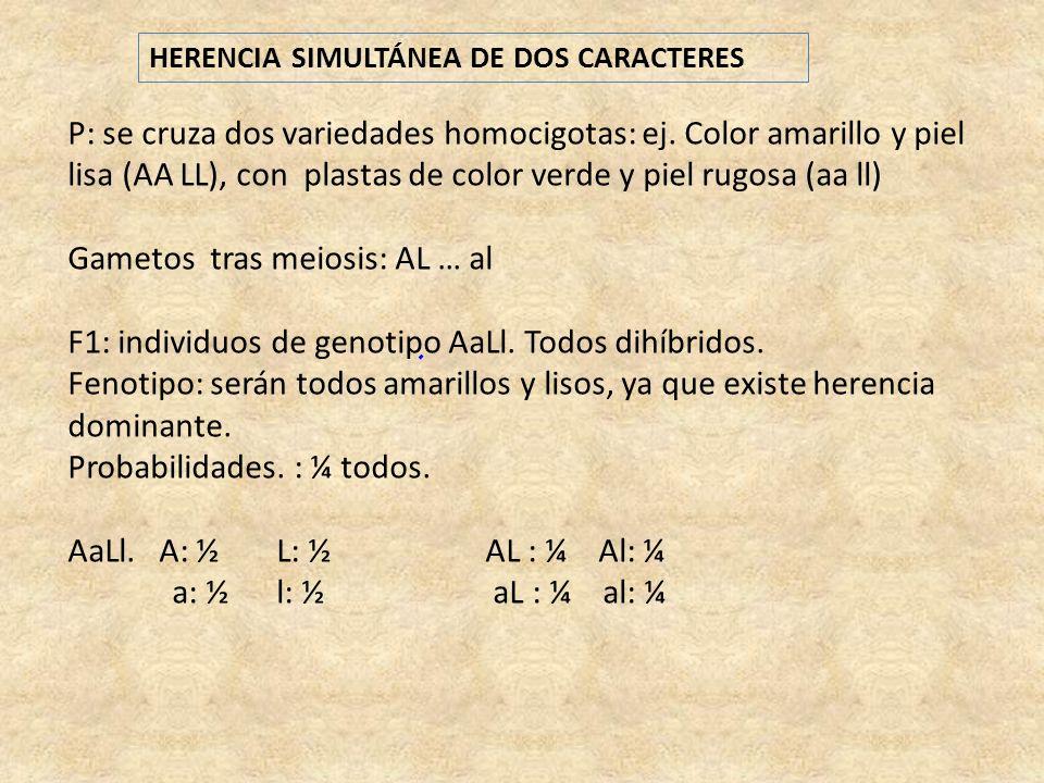 HERENCIA SIMULTÁNEA DE DOS CARACTERES P: se cruza dos variedades homocigotas: ej. Color amarillo y piel lisa (AA LL), con plastas de color verde y pie