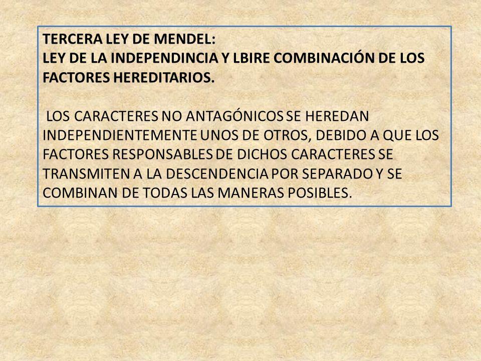 TERCERA LEY DE MENDEL: LEY DE LA INDEPENDINCIA Y LBIRE COMBINACIÓN DE LOS FACTORES HEREDITARIOS. LOS CARACTERES NO ANTAGÓNICOS SE HEREDAN INDEPENDIENT