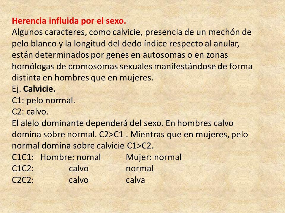 Herencia influida por el sexo. Algunos caracteres, como calvicie, presencia de un mechón de pelo blanco y la longitud del dedo índice respecto al anul