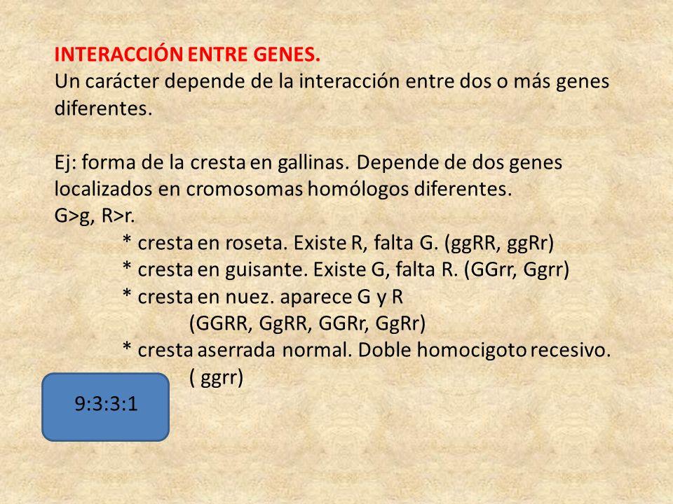 INTERACCIÓN ENTRE GENES. Un carácter depende de la interacción entre dos o más genes diferentes. Ej: forma de la cresta en gallinas. Depende de dos ge
