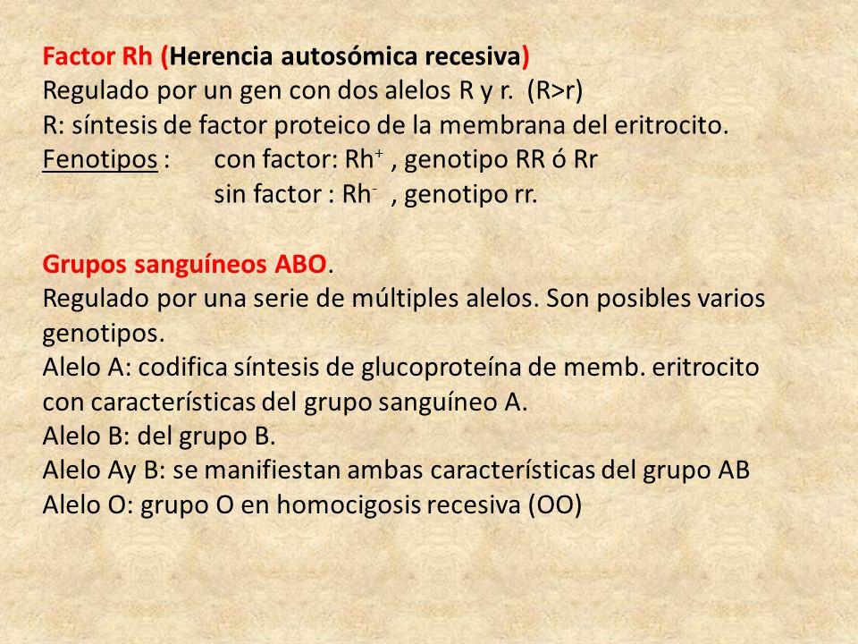 Factor Rh (Herencia autosómica recesiva) Regulado por un gen con dos alelos R y r. (R>r) R: síntesis de factor proteico de la membrana del eritrocito.