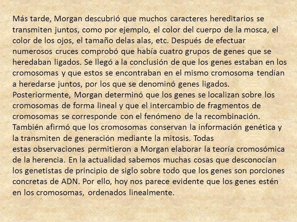 Más tarde, Morgan descubrió que muchos caracteres hereditarios se transmiten juntos, como por ejemplo, el color del cuerpo de la mosca, el color de lo