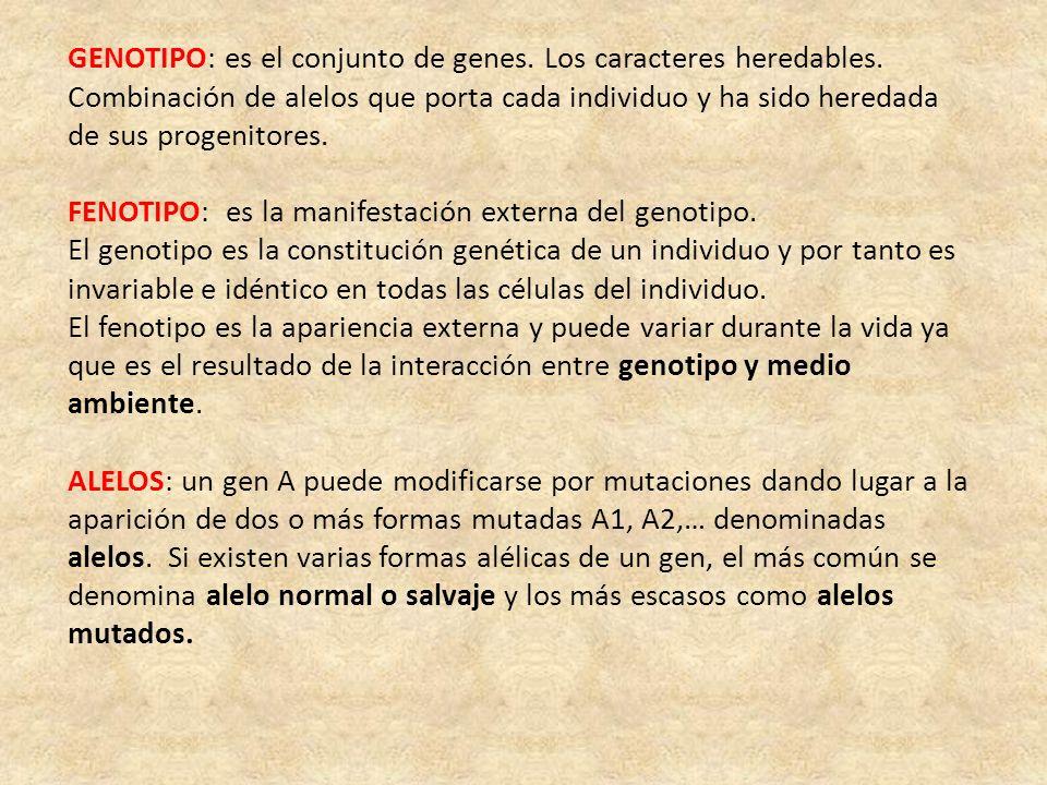 GENOTIPO: es el conjunto de genes. Los caracteres heredables. Combinación de alelos que porta cada individuo y ha sido heredada de sus progenitores. F