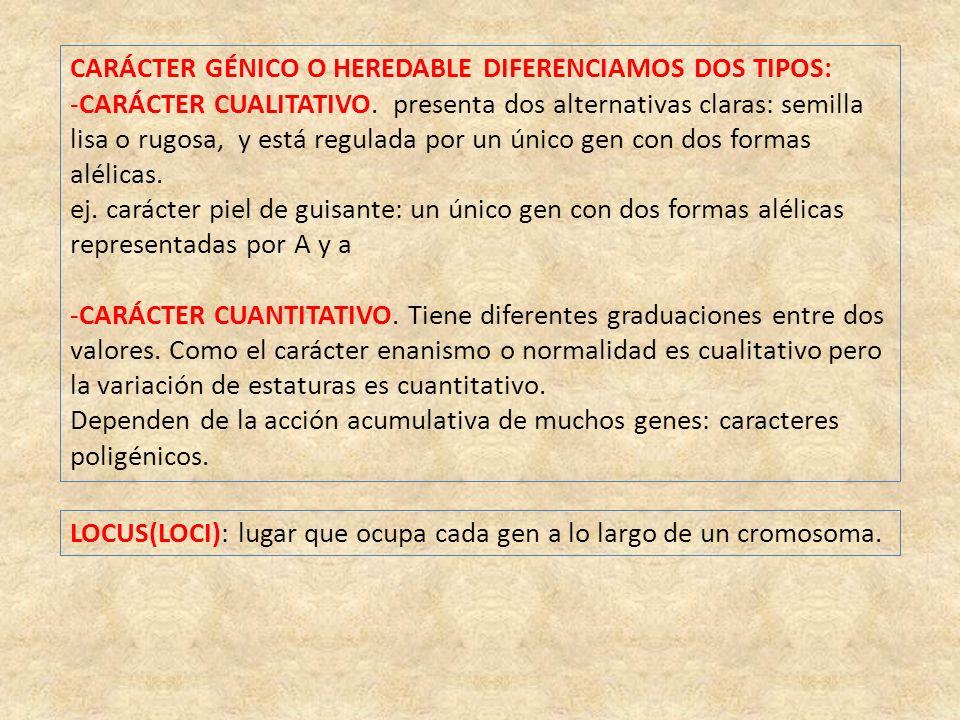 CARÁCTER GÉNICO O HEREDABLE DIFERENCIAMOS DOS TIPOS: -CARÁCTER CUALITATIVO.