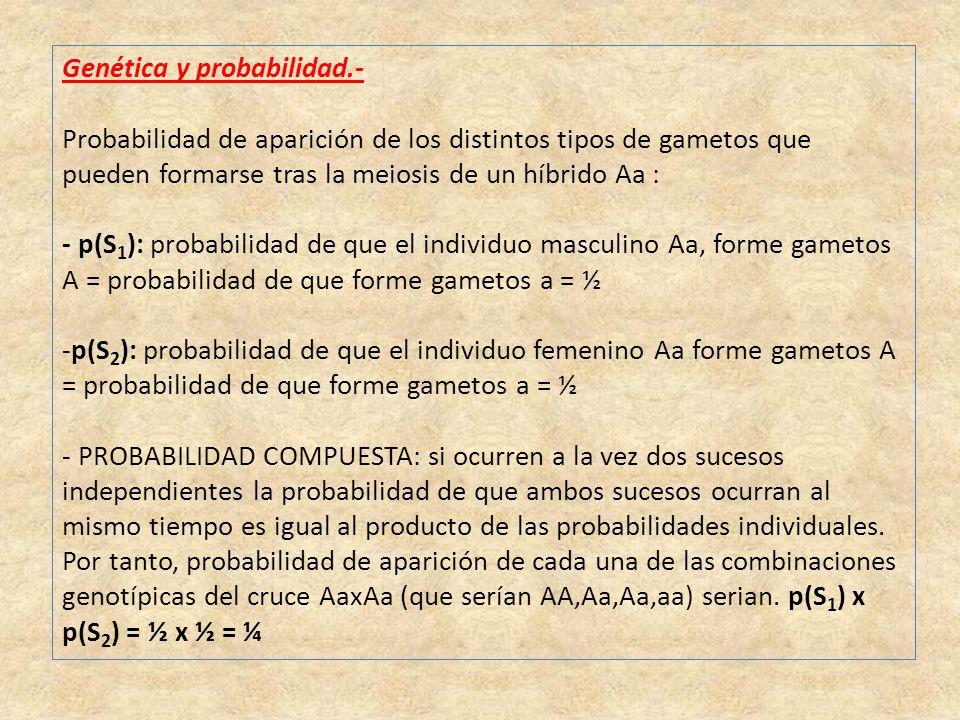 Genética y probabilidad.- Probabilidad de aparición de los distintos tipos de gametos que pueden formarse tras la meiosis de un híbrido Aa : - p(S 1 ): probabilidad de que el individuo masculino Aa, forme gametos A = probabilidad de que forme gametos a = ½ -p(S 2 ): probabilidad de que el individuo femenino Aa forme gametos A = probabilidad de que forme gametos a = ½ - PROBABILIDAD COMPUESTA: si ocurren a la vez dos sucesos independientes la probabilidad de que ambos sucesos ocurran al mismo tiempo es igual al producto de las probabilidades individuales.
