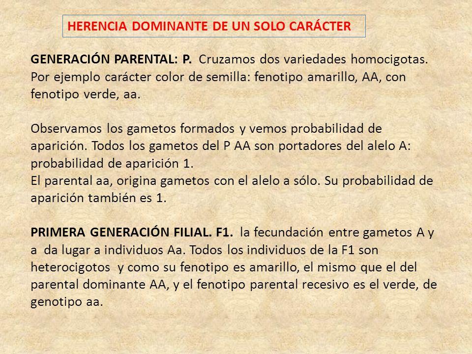 HERENCIA DOMINANTE DE UN SOLO CARÁCTER GENERACIÓN PARENTAL: P. Cruzamos dos variedades homocigotas. Por ejemplo carácter color de semilla: fenotipo am