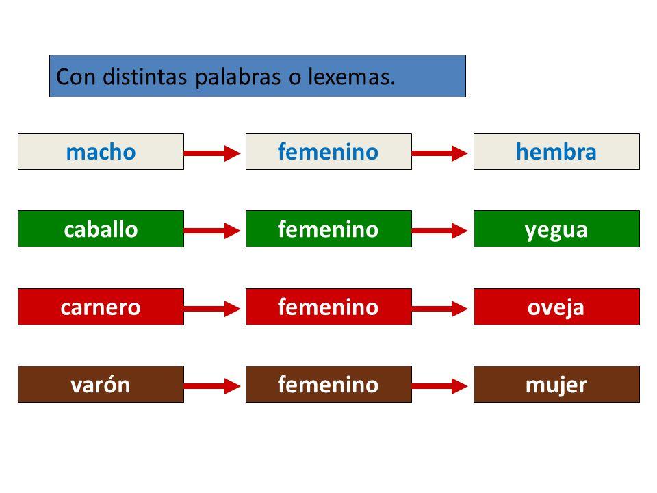 el artistafemeninola artista el astronautafemeninola astronauta carnerofemeninooveja Mediante distinto artículo el/la cuando los nombres tienen la misma forma para el masculino y para el femenino.