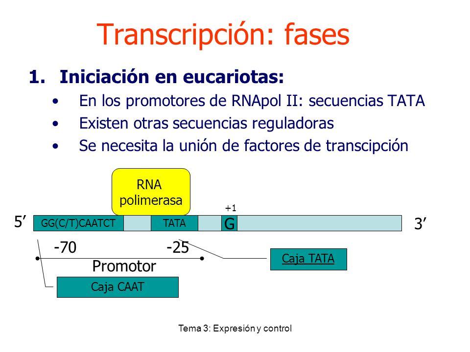 Tema 3: Expresión y control Transcripción: fases 1.Iniciación en eucariotas: En los promotores de RNApol II: secuencias TATA Existen otras secuencias