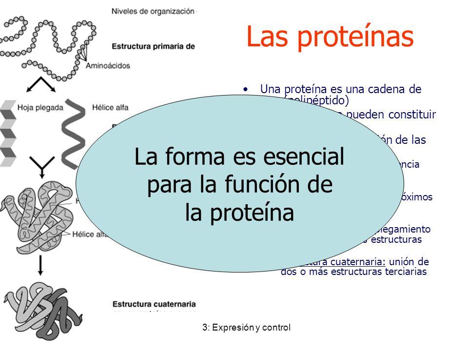 Tema 3: Expresión y control Las proteínas Una proteína es una cadena de a.a. (polipéptido) Hay 20 a.a. que pueden constituir proteínas. 4 Niveles de o