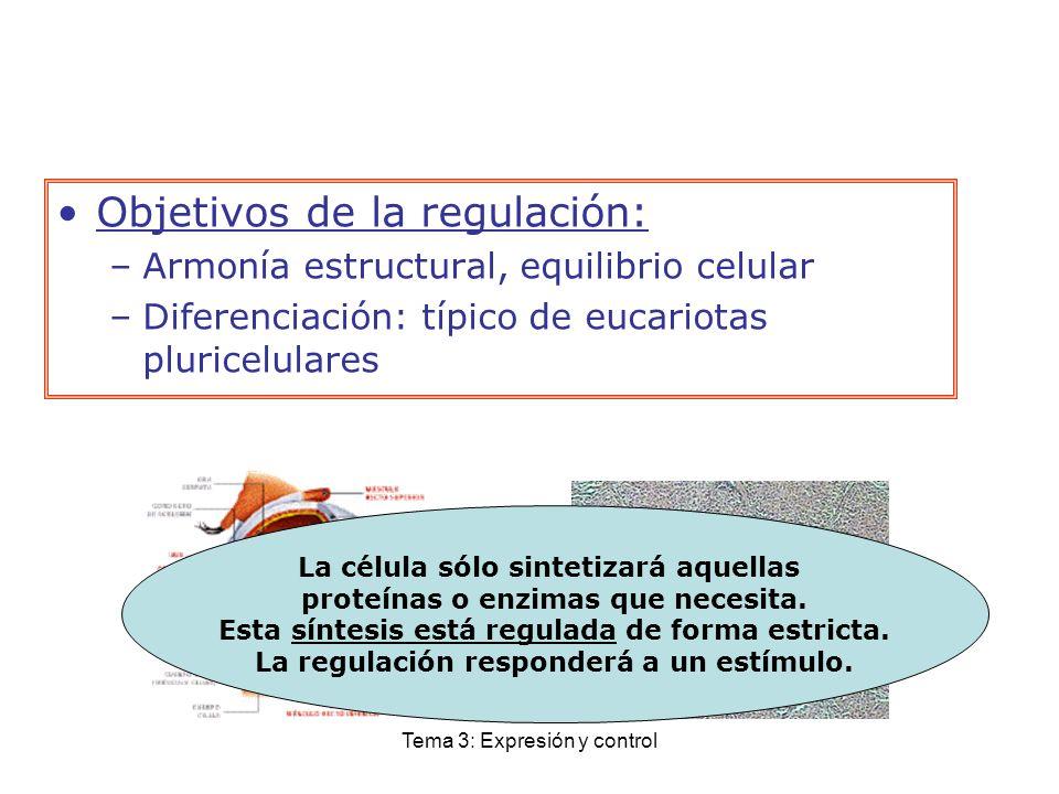 Tema 3: Expresión y control Objetivos de la regulación: –Armonía estructural, equilibrio celular –Diferenciación: típico de eucariotas pluricelulares