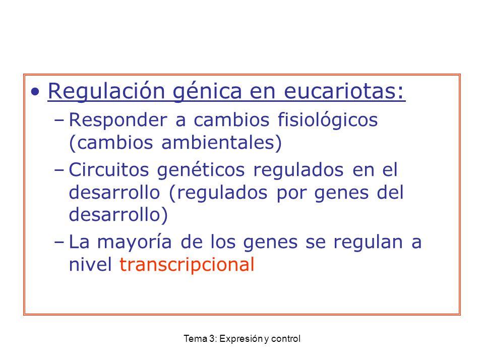 Tema 3: Expresión y control Regulación génica en eucariotas: –Responder a cambios fisiológicos (cambios ambientales) –Circuitos genéticos regulados en