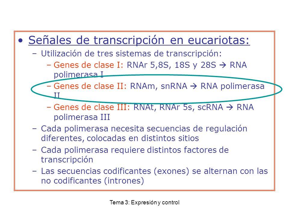 Tema 3: Expresión y control Señales de transcripción en eucariotas: –Utilización de tres sistemas de transcripción: –Genes de clase I: RNAr 5,8S, 18S
