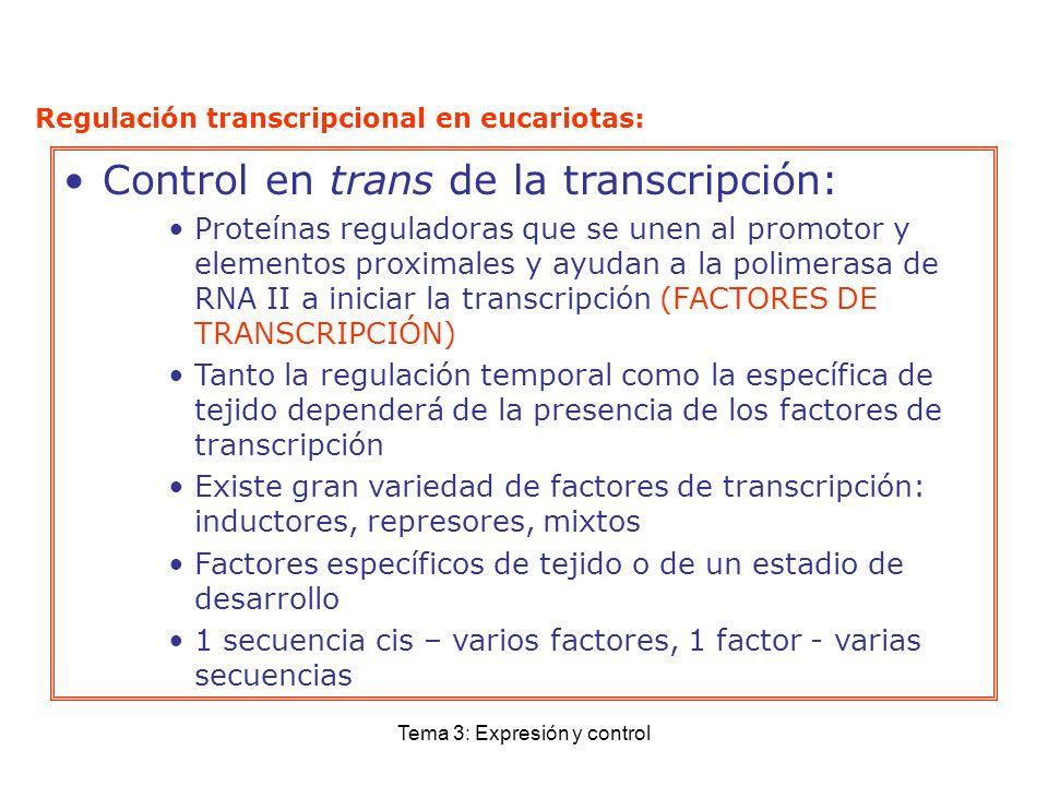Tema 3: Expresión y control Control en trans de la transcripción: Proteínas reguladoras que se unen al promotor y elementos proximales y ayudan a la p