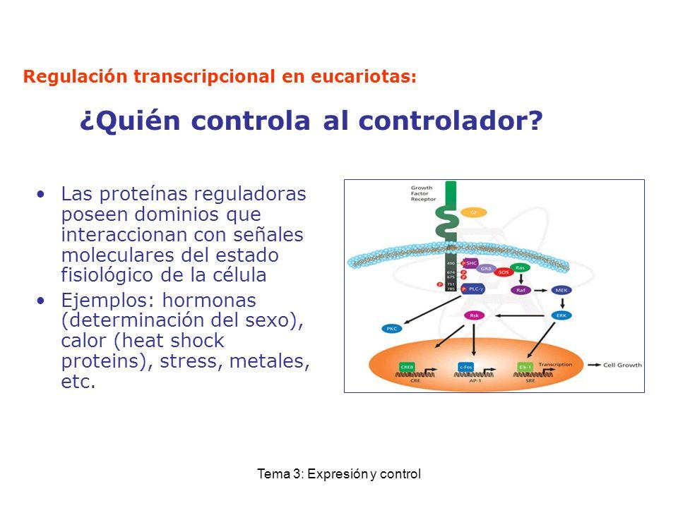 Tema 3: Expresión y control Regulación transcripcional en eucariotas: ¿Quién controla al controlador? Las proteínas reguladoras poseen dominios que in