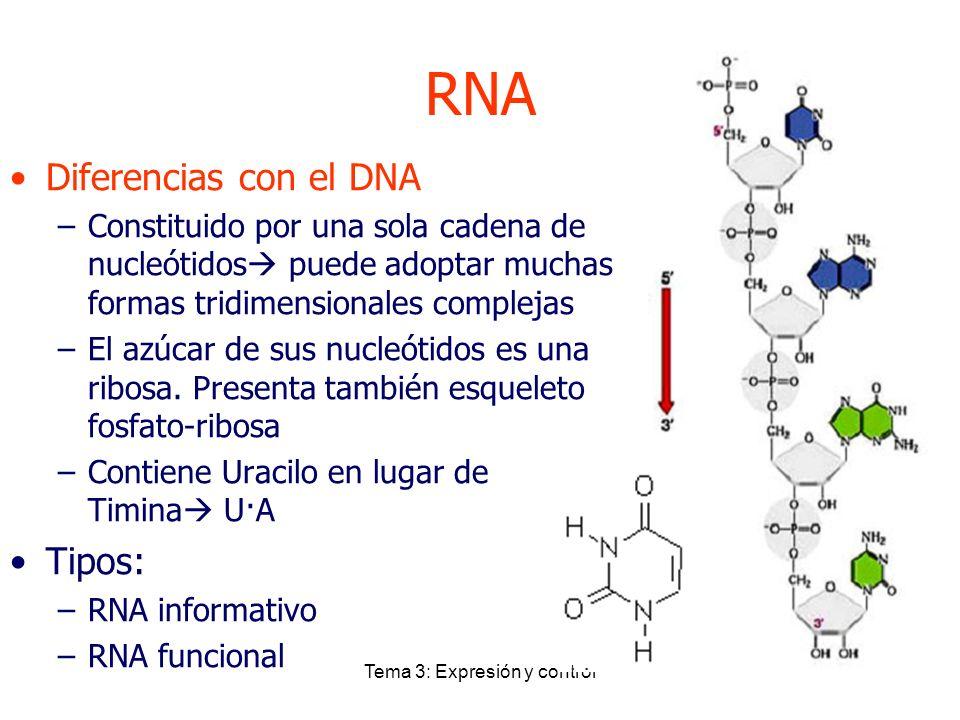 Tema 3: Expresión y control RNA Diferencias con el DNA –Constituido por una sola cadena de nucleótidos puede adoptar muchas formas tridimensionales co