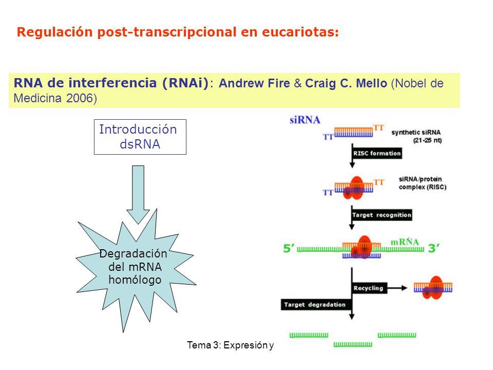 Tema 3: Expresión y control Regulación post-transcripcional en eucariotas: RNA de interferencia (RNAi): Andrew Fire & Craig C. Mello (Nobel de Medicin