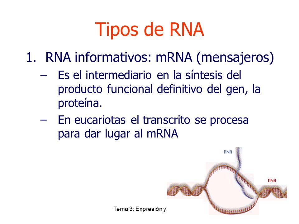 Tema 3: Expresión y control Tipos de RNA 1.RNA informativos: mRNA (mensajeros) –Es el intermediario en la síntesis del producto funcional definitivo d