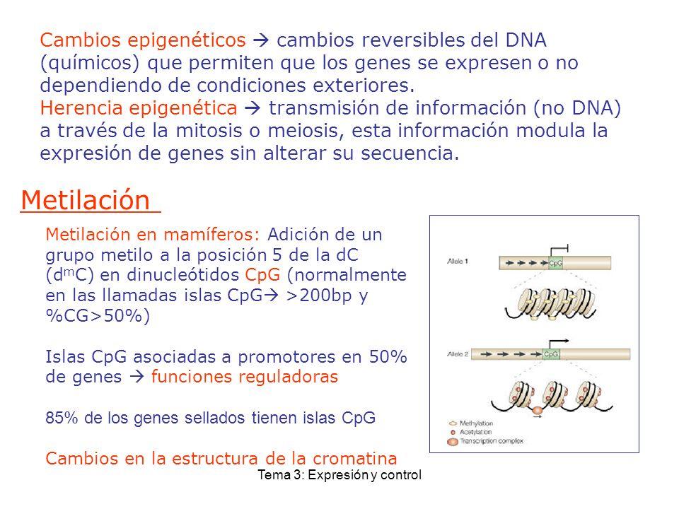 Tema 3: Expresión y control Cambios epigenéticos cambios reversibles del DNA (químicos) que permiten que los genes se expresen o no dependiendo de con