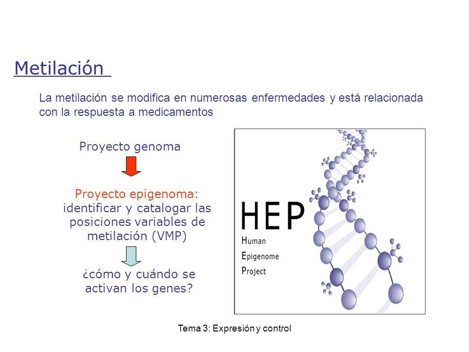 Tema 3: Expresión y control Proyecto epigenoma: identificar y catalogar las posiciones variables de metilación (VMP) ¿cómo y cuándo se activan los gen