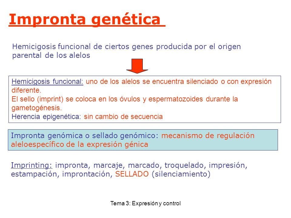 Tema 3: Expresión y control Impronta genética Hemicigosis funcional de ciertos genes producida por el origen parental de los alelos Imprinting: impron