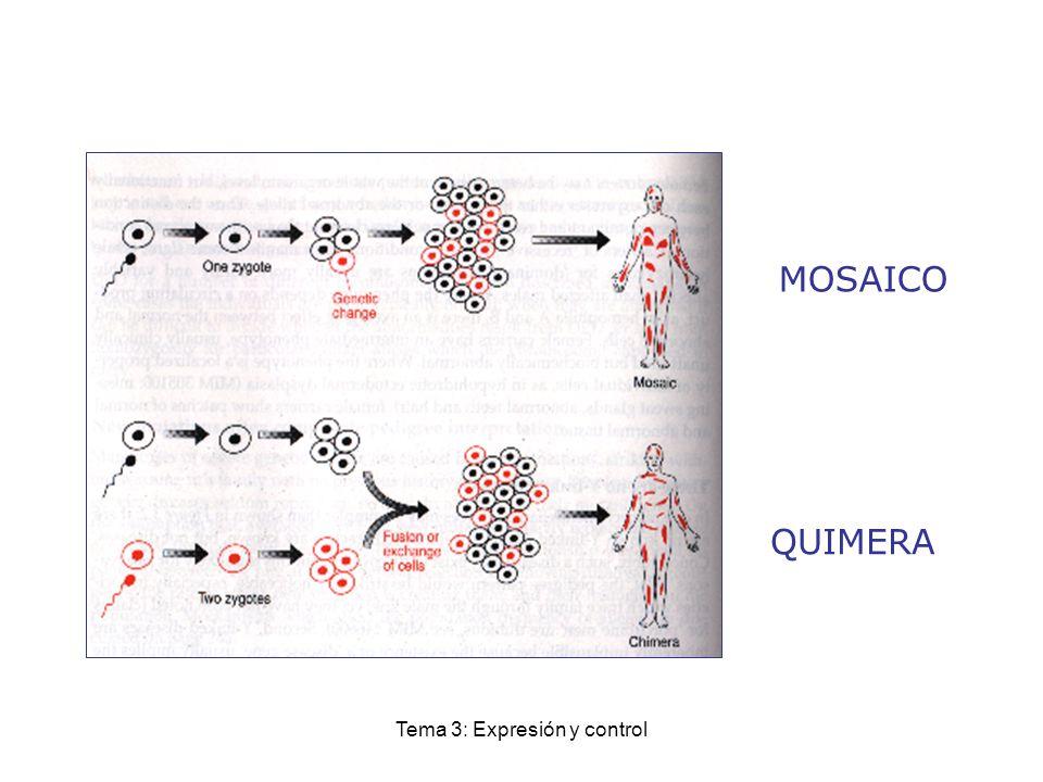 Tema 3: Expresión y control MOSAICO QUIMERA