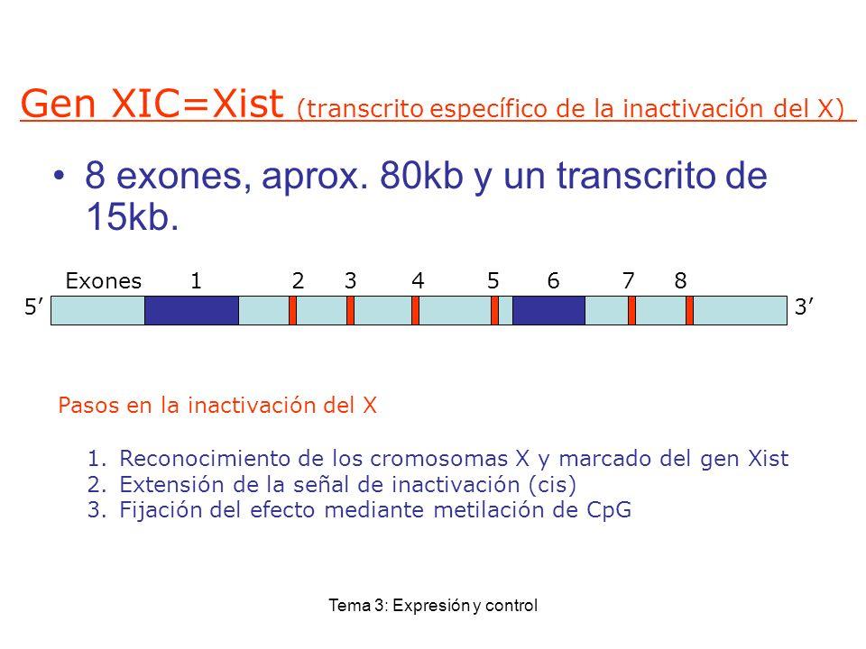 Tema 3: Expresión y control Gen XIC=Xist (transcrito específico de la inactivación del X) 8 exones, aprox. 80kb y un transcrito de 15kb. Exones 1 2 3
