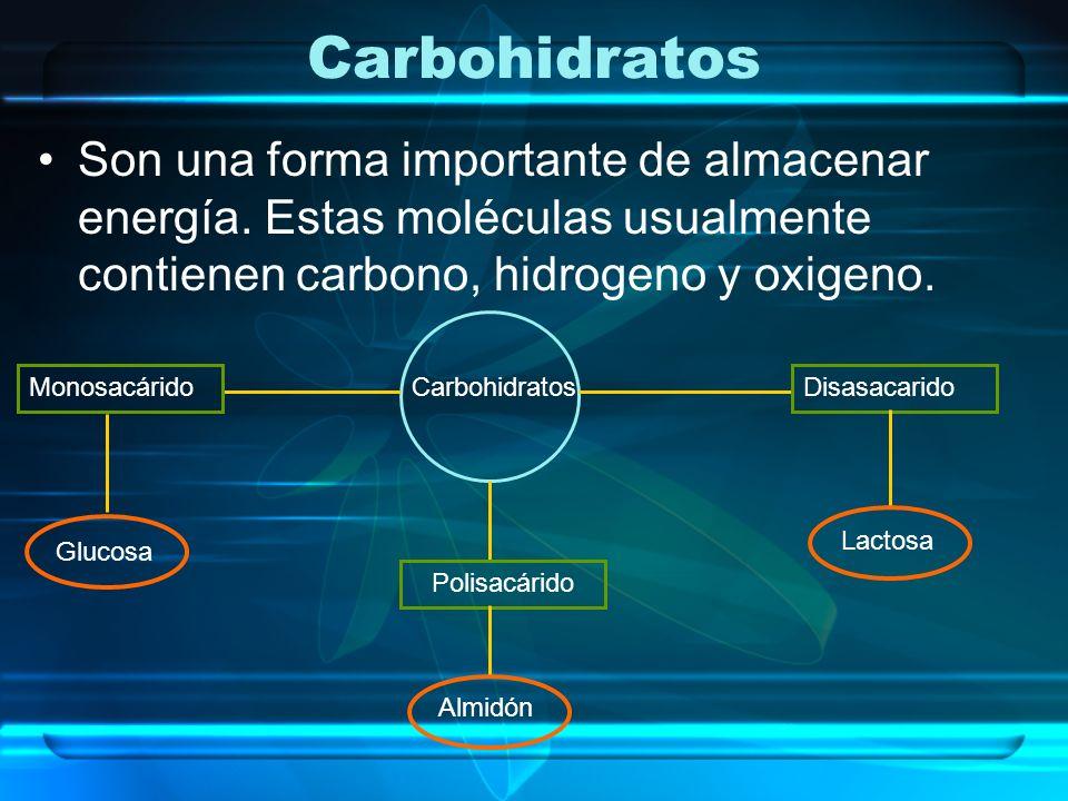 Carbohidratos Son una forma importante de almacenar energía. Estas moléculas usualmente contienen carbono, hidrogeno y oxigeno. Carbohidratos Monosacá
