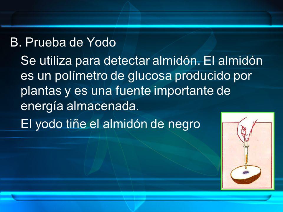B. Prueba de Yodo Se utiliza para detectar almidón. El almidón es un polímetro de glucosa producido por plantas y es una fuente importante de energía
