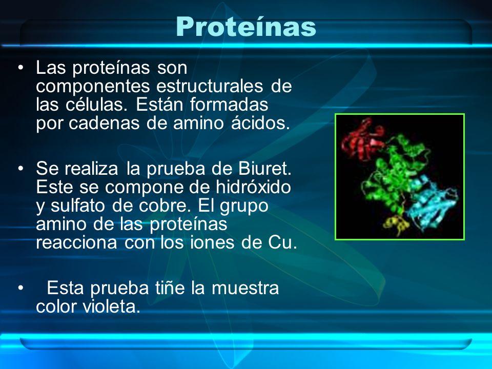 Proteínas Las proteínas son componentes estructurales de las células. Están formadas por cadenas de amino ácidos. Se realiza la prueba de Biuret. Este