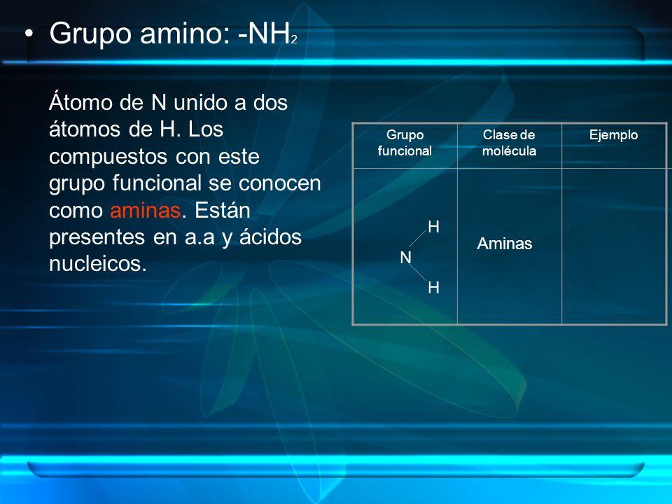 Grupo amino: -NH 2 Átomo de N unido a dos átomos de H. Los compuestos con este grupo funcional se conocen como aminas. Están presentes en a.a y ácidos
