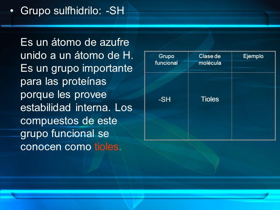 Grupo sulfhidrilo: -SH Es un átomo de azufre unido a un átomo de H. Es un grupo importante para las proteínas porque les provee estabilidad interna. L