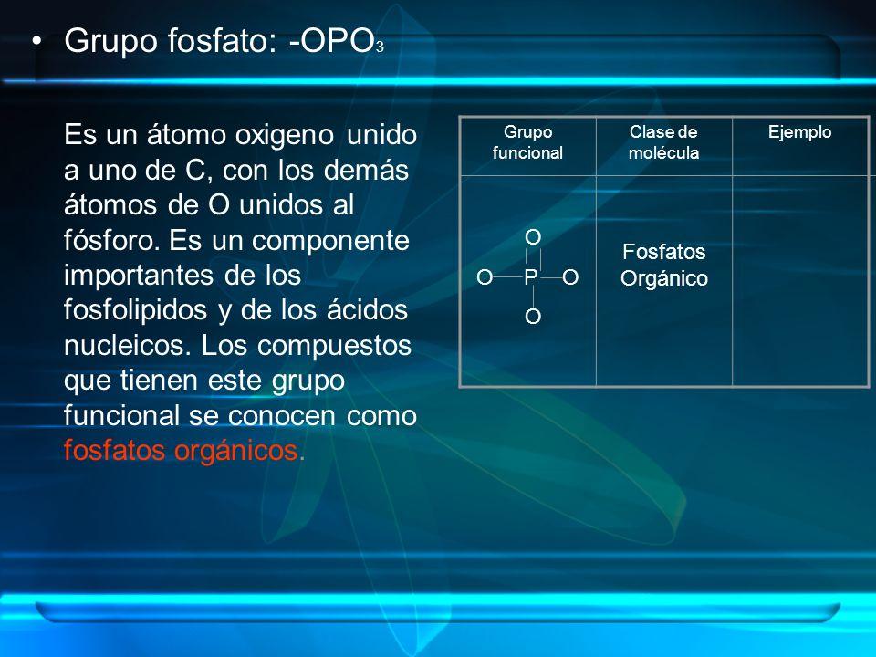 Grupo fosfato: -OPO 3 Es un átomo oxigeno unido a uno de C, con los demás átomos de O unidos al fósforo. Es un componente importantes de los fosfolipi