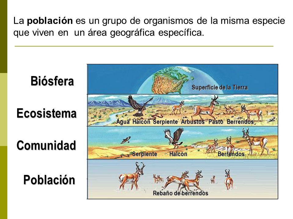 Población Rebaño de berrendos Halcón Agua Superficie de la Tierra Comunidad Ecosistema Biósfera Berrendos HalcónPastoSerpienteArbustosBerrendos Serpie