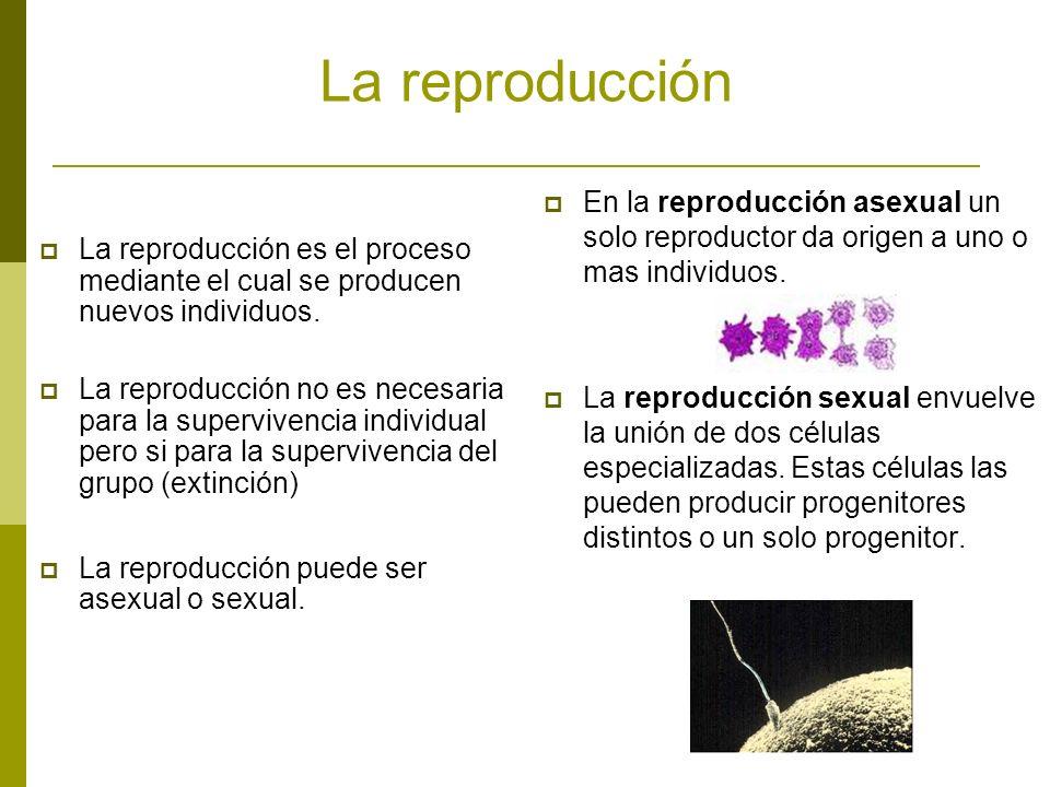 La reproducción La reproducción es el proceso mediante el cual se producen nuevos individuos. La reproducción no es necesaria para la supervivencia in