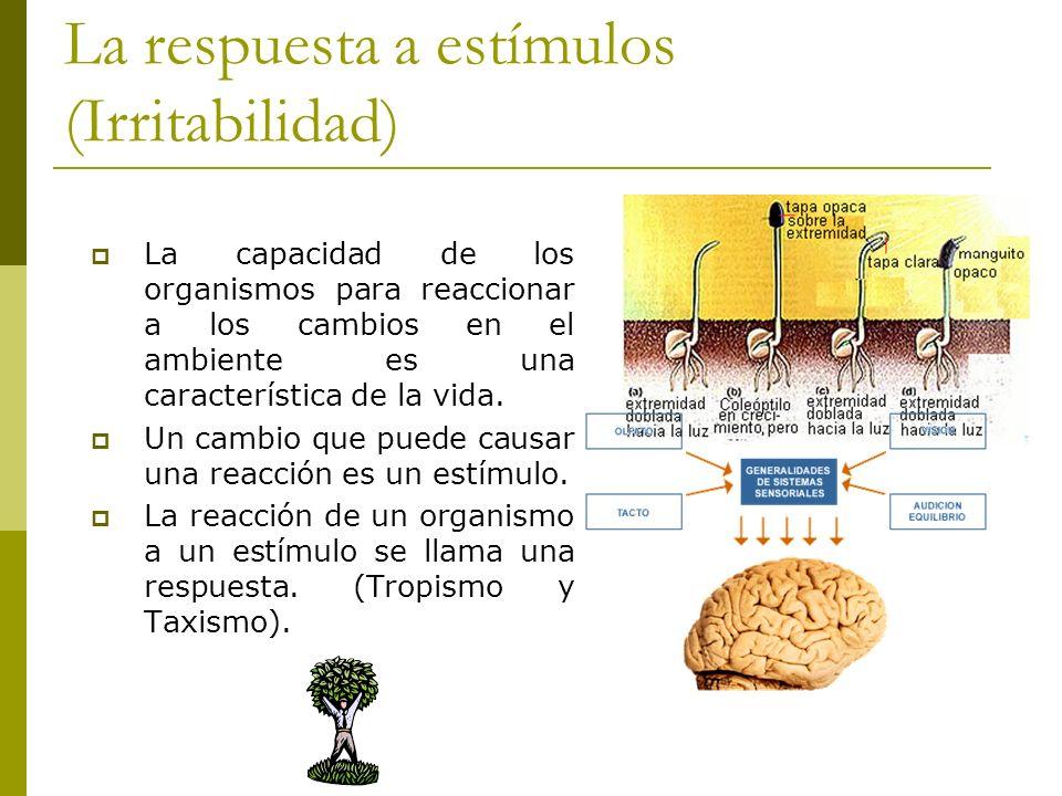 La respuesta a estímulos (Irritabilidad) La capacidad de los organismos para reaccionar a los cambios en el ambiente es una característica de la vida.