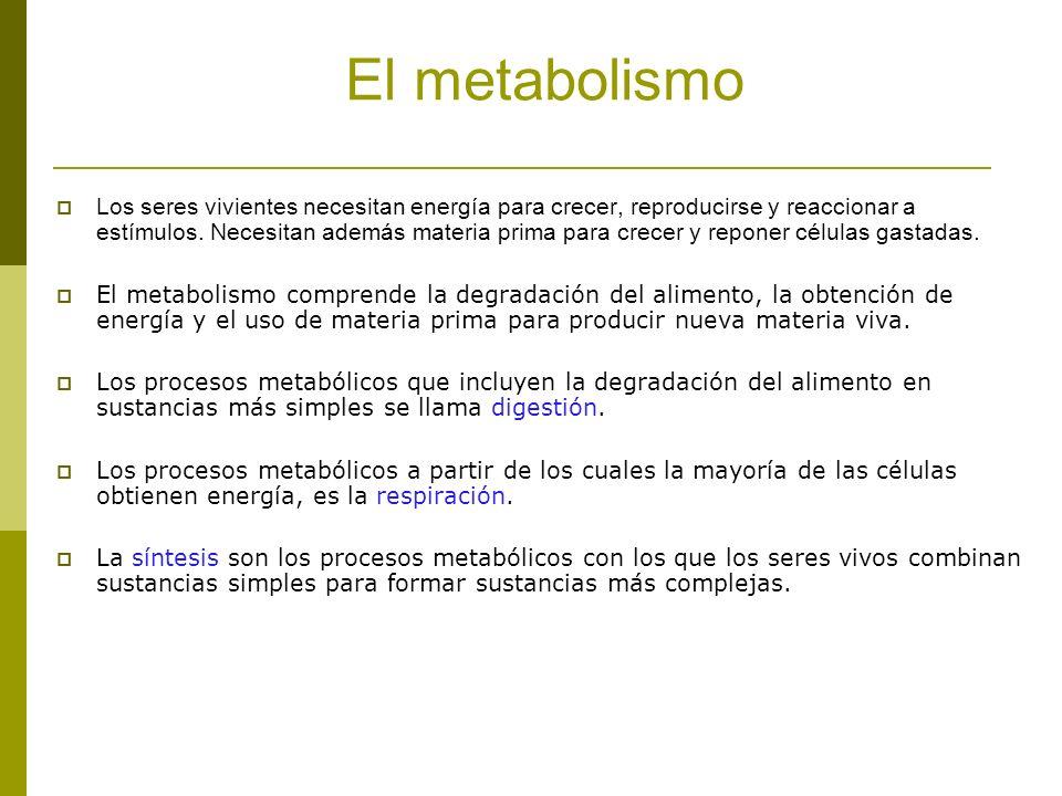 El metabolismo Los seres vivientes necesitan energía para crecer, reproducirse y reaccionar a estímulos. Necesitan además materia prima para crecer y