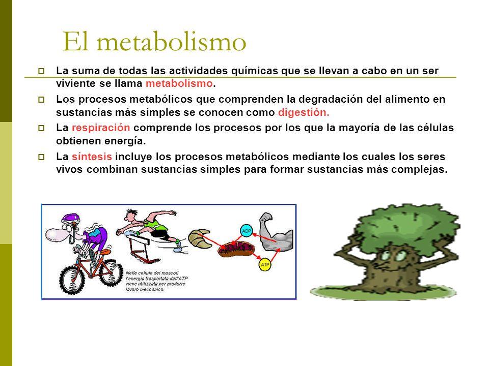 El metabolismo La suma de todas las actividades químicas que se llevan a cabo en un ser viviente se llama metabolismo. Los procesos metabólicos que co