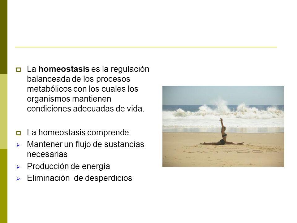La homeostasis es la regulación balanceada de los procesos metabólicos con los cuales los organismos mantienen condiciones adecuadas de vida. La homeo