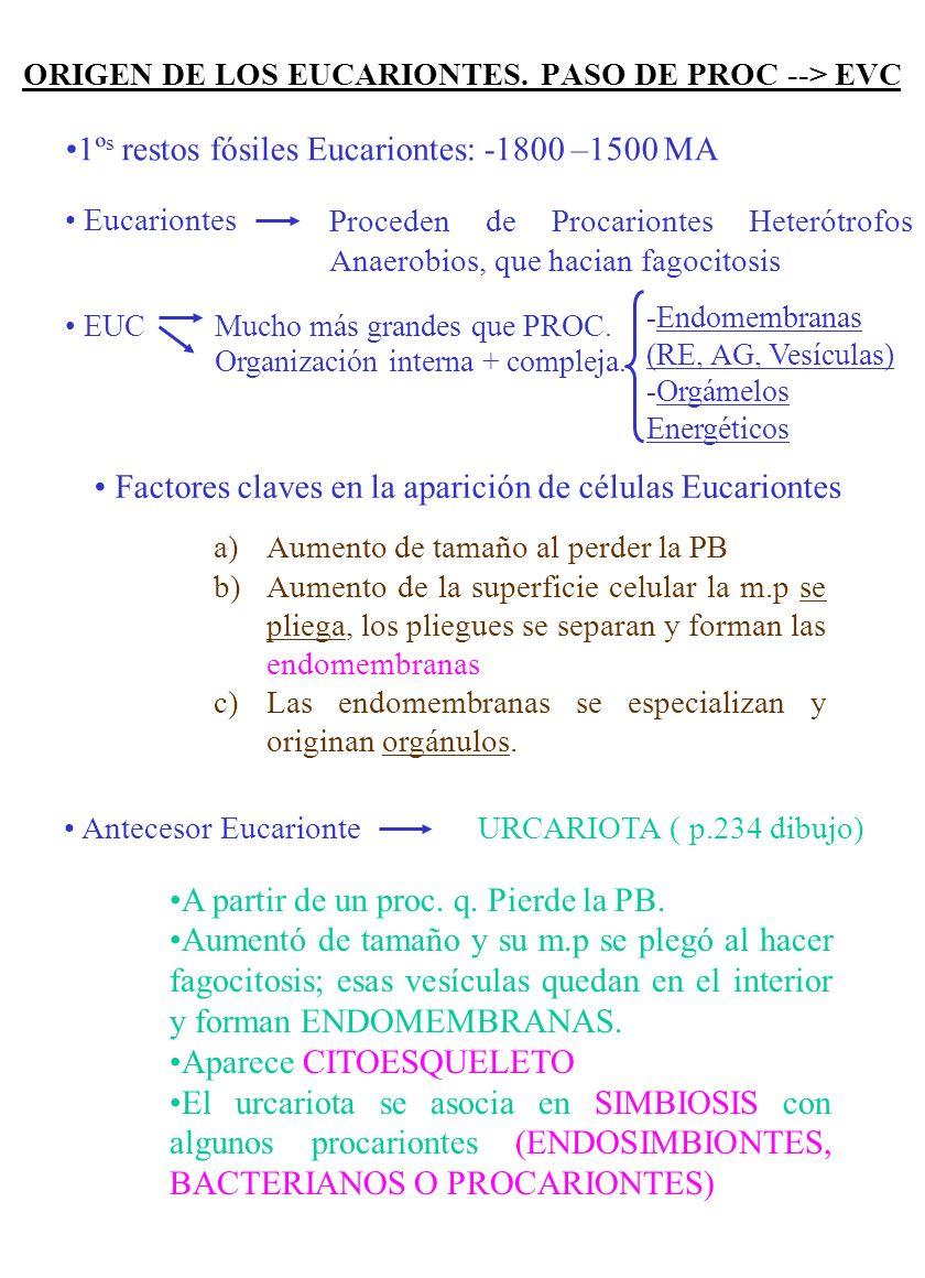 SE DISTINGUEN DOS ETÁPAS 1)Prebiológica, Abiótica, Química (-4600 –3800 MA) 2)Biologíca, Biotíca o Celular (> -3800 MA) ETAPA PREBIOLÓGICA Etapas o sucesos A) Síntesis de precursores (moléculas orgánicas sencillas) Moléculas inorgánicas Ácido cianhídrico Formaldehido Monosacáridos A.g Aminoácidos B.N.