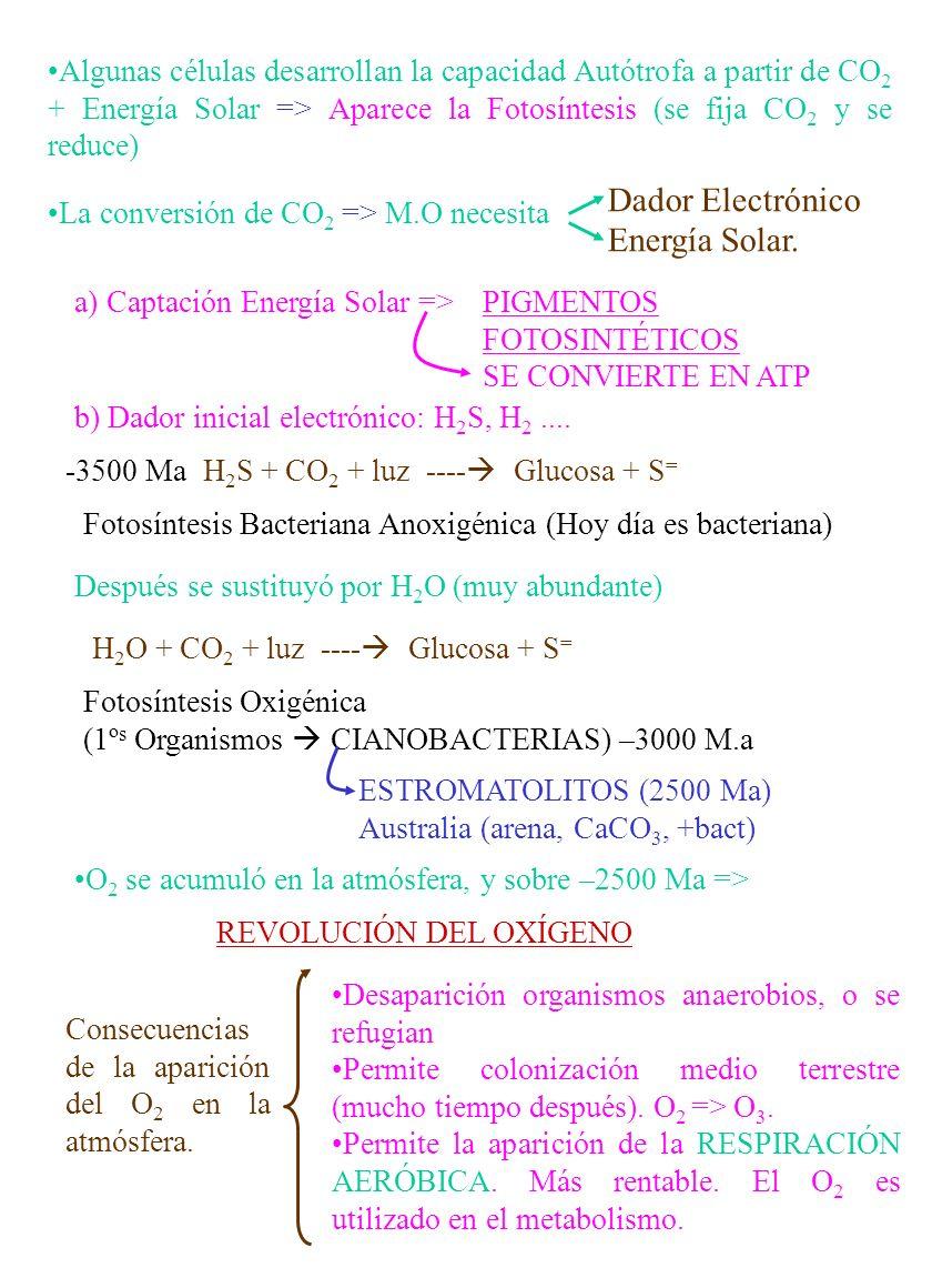 SISTEMAS FISICO-QUÍMICO (Asociación de moléculas) SISTEMAS BIOLÓGICO (CÉLULAS) Muy difícil de explicar PROTOBIONTE 3.800 M.a PROGENOTA ARQUEBACTERIAS URCARIOTA Antecesor EUBACTERIAS EUCARIONTESCIANOBACTERIAS EUBACTERIAS EUC.ANIMALEUC.