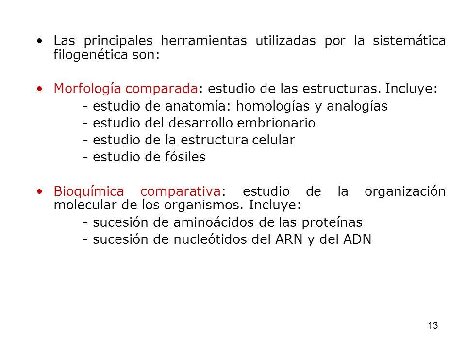 13 Las principales herramientas utilizadas por la sistemática filogenética son: Morfología comparada: estudio de las estructuras. Incluye: - estudio d