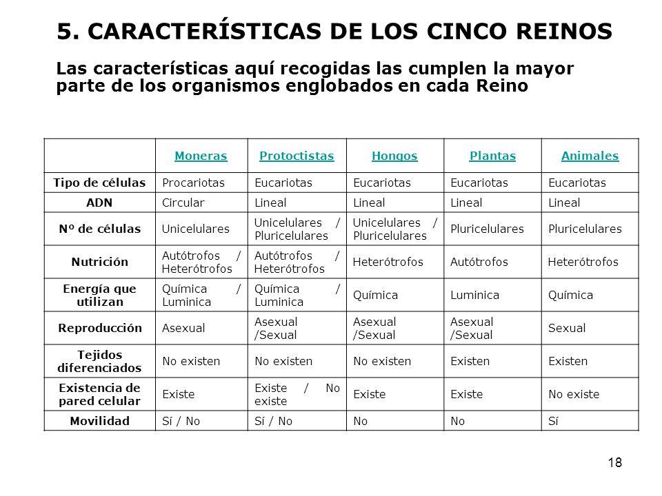 18 MonerasProtoctistasHongosPlantasAnimales Tipo de célulasProcariotasEucariotas ADNCircularLineal Nº de célulasUnicelulares Unicelulares / Pluricelul